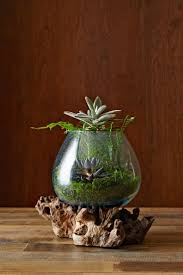 252 best houseplants in glass houses images on pinterest indoor