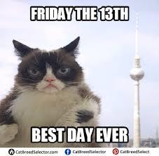 Meme Grumpy Cat - grumpy cat memes cat breed selector