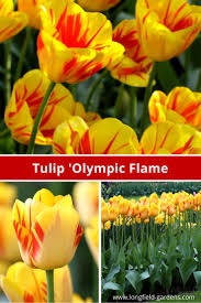 229 best spring blooming bulbs images on pinterest spring