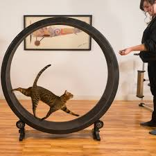 Cool Cat Furniture Amazon Com One Fast Cat Exercise Wheel Black Pet Supplies