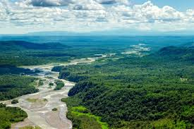 amazon basin stanford scientists find amazon rain forest responds quickly to