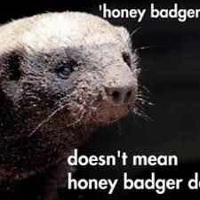 Honey Badger Memes - honey badger don t care but he feels for nature