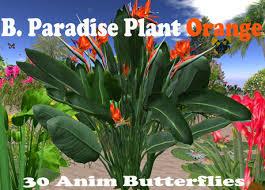 second marketplace plant bird paradise orange v8 mesh 3x2