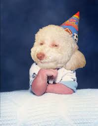 Stoned Dogs Meme - image 45927 birthday dog know your meme