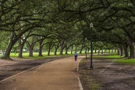 oak trees shade walkway stock photo schubphoto 32546249