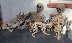 halloween posable skeleton halloween 5ft giant life size poseable skeleton dog cat bird