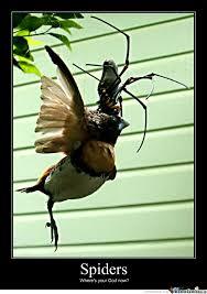 Huge Spider Memes Image Memes - huge fucking spiders by wafflekone meme center