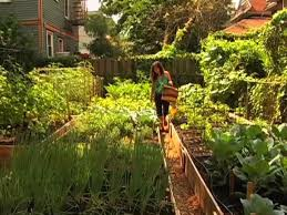 nyc u0027s cool new backyard farms growing more than just produce on vimeo