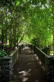 Brisbane Botanic Gardens Mount Coot Tha by 64 Best Places To Take The Kids Images On Pinterest Brisbane