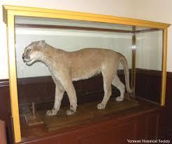 Vermont wild animals images The last catamount in vermont vermont historical society jpg