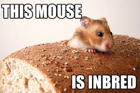Rodent Meme - punday ratical rodent puns smosh