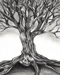 14 best trees sketch images on pinterest drawings pencil art