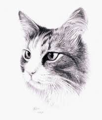 czeshop images cat drawing