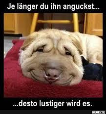 lustige hundesprüche die besten 25 lustige hund humor ideen auf welpen