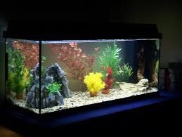 aquarium decoration ideas freshwater good ideas for aquarium decor with fish planted saltwater