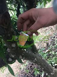 sprayer drone spray fruit trees fruit trees sprayer drone joyance tech