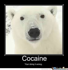Bear Cocaine Meme - th id oip b3ui85gzdibdknrzezwlrqhaho