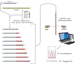 Dna Mapping Dna Sequencing Article Biotechnology Khan Academy