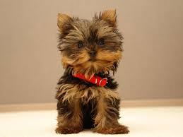 cute puppy wallpaper blog title