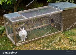 pet white rabbit rabbit hutch enclosure stock photo 679298362