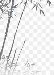 bamboo sketch png images vectors and psd files free download