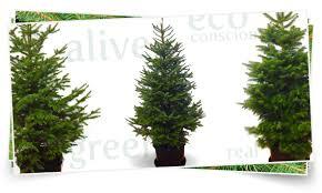 evergrow live tree rentals co home