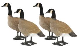 Gander Mountain Layout Blind Bigfoot Bull Canada Goose Decoy Rogers Sporting Goods