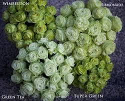green roses the green study flirty fleurs the florist