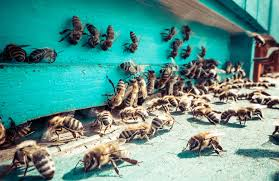 bee removal safe bee removal professional bee removal
