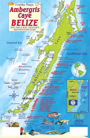 belize maps dive fish id cards