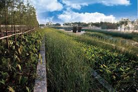 design yu harvard design magazine kongjian yu turenscape landscape
