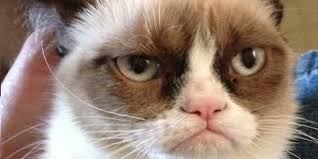 Meme Seriously - grumpy cat meme getting its own movie seriously cinemablend