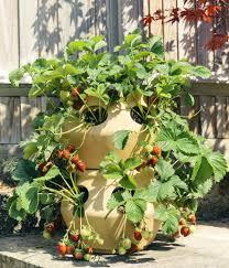 herb planter diy herb planters u2013 aracsorgulama info