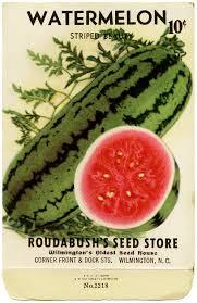 vintage seed packets vintage watermelon seed packet design shop