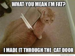 Mean Kitty Meme - what do you mean i m fat clattr