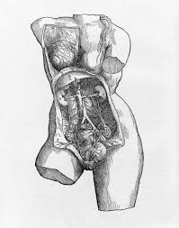 Anatomy Structure Of Human Body De Humani Corporis Fabrica Of The Structure Of The Human Body