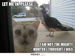 Meme Bird - bird memes funny bird pictures memey com