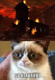 Angry Cat Meme - best 25 angry cat ideas on pinterest angry cat memes grumpy