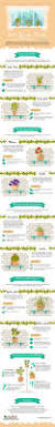 Best Indoor Plants by Best Indoor Plants To Buy Infographic