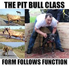 Pitbull Meme - anonymous meme the pit bull class form follows function