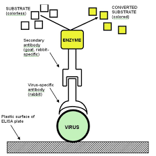 Methods Of Controlling Plant Diseases - introduction to plant viruses the invisible foe