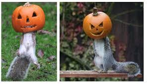 i spy animals creatures perfect for halloween