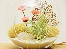 bliss gardens air plant terrarium combo set with 4