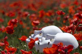 free stock photo of field floral flower field