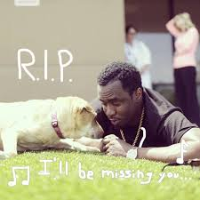 coping with loss of pet coping with pet loss pet attack