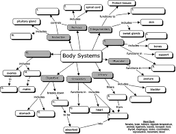 endocrine system concept map organ systems concept map