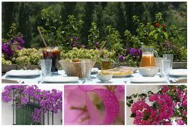 bougainvilleas gardens gardening andalucia com