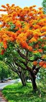 plants native to madagascar 511 best trees images on pinterest nature flowering trees and