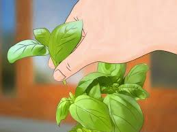4 ways to grow an indoor herb garden wikihow