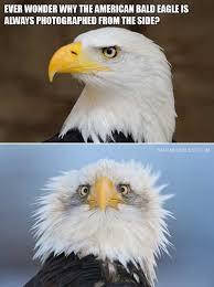 America Eagle Meme - dopl3r com memes ever wonder why the american bald eagle is
